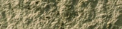 Detalle crustáceos