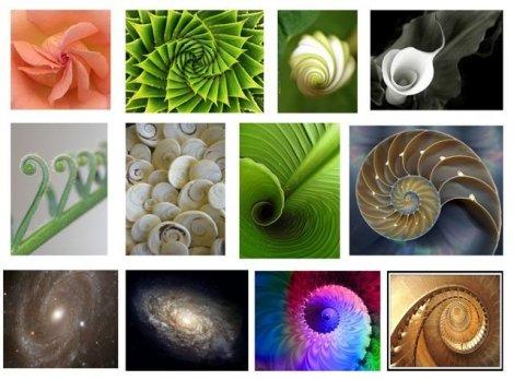 Espirales Aureas