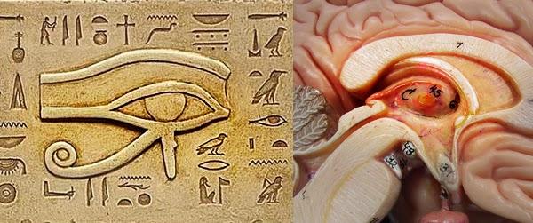 El Ojo de Horus - Glándula Pineal