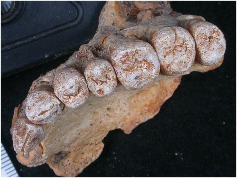 fosileshomosapiens1_18aa6fec
