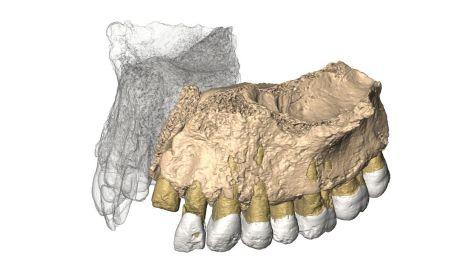 fosileshomosapiens4_0f9c2bb0