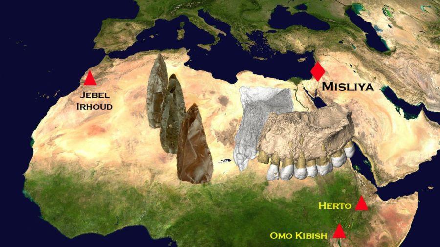 fosileshomosapiens6_0b5d625d